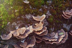 Fungi (Photo)