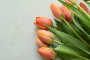 Tulip mockup | stock image