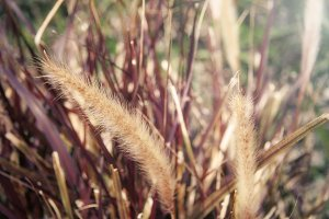 Soft Grass (Photo)