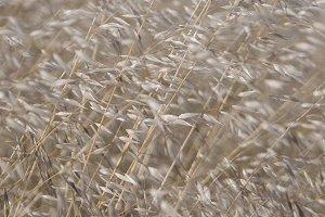 Glowing Long Grass (Photo)