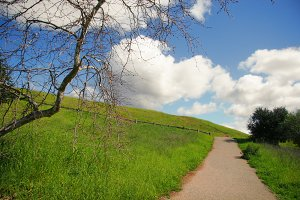 Path and Green Grass (Photo)