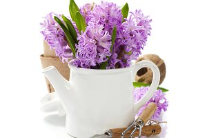 Beautiful Hyacinths in vase and gard