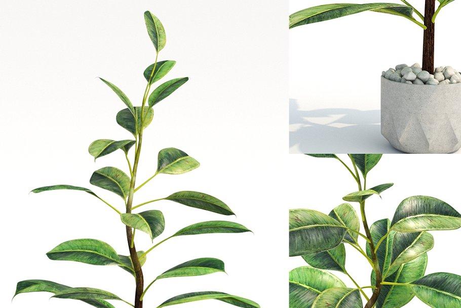 plant825