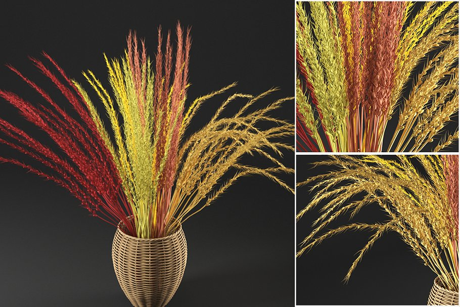 dry decorative plant
