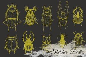 Vector Set Sketches Beetle