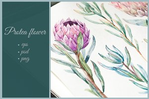 Watercolor Flower Protea