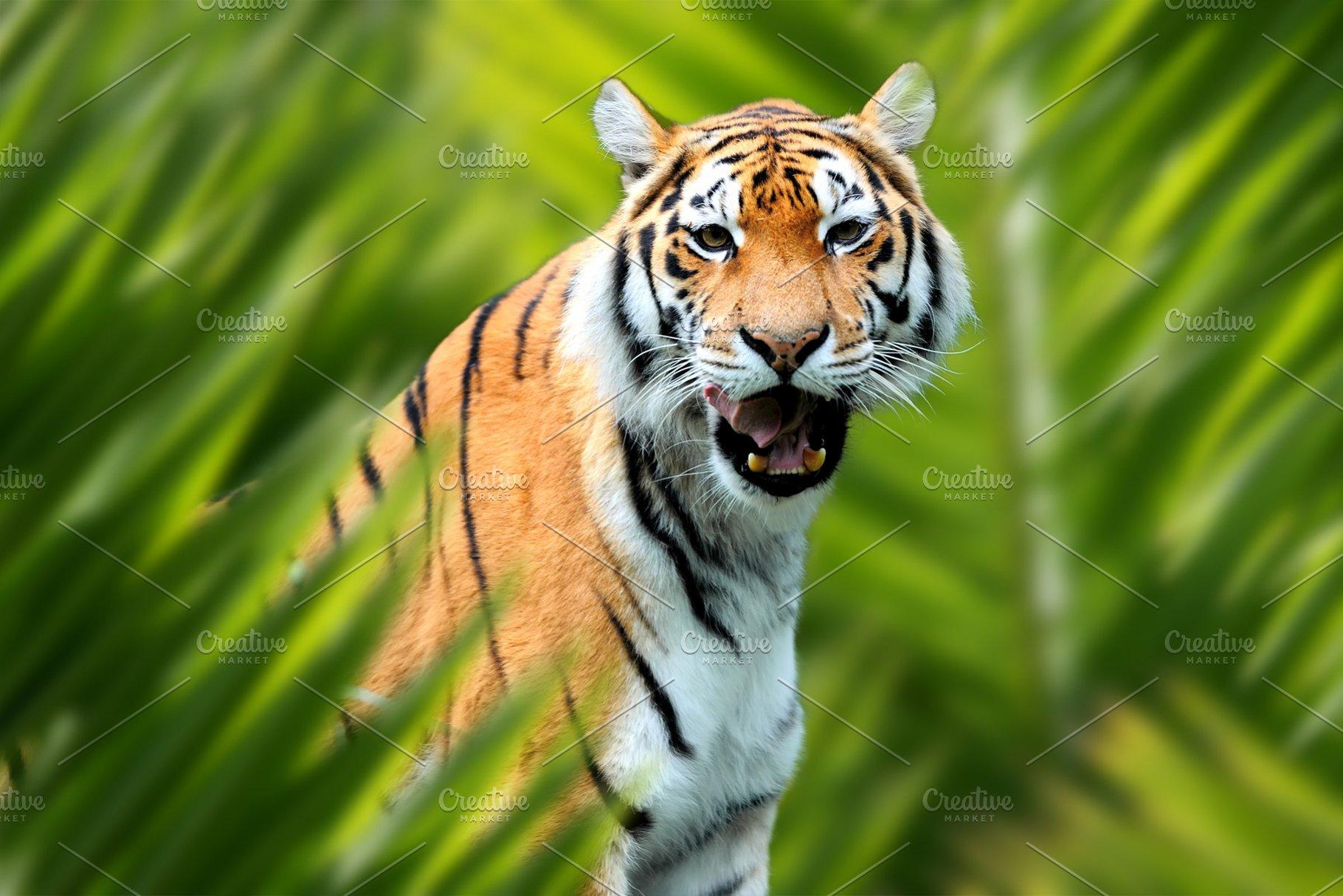 Tiger portrait in jungle