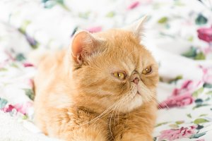 Cute red cat laying on bed