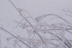Details of frozen Plants in Winter