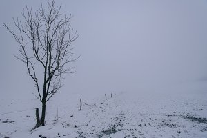Snow covered Trees and Field
