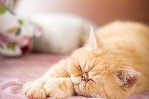 Cute cat sleeping on bed