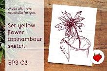 Set flower topinambour sketch