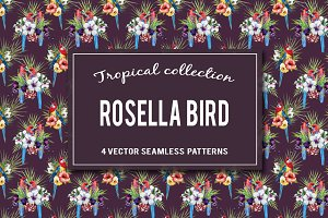 Tropical rosella bird patterns