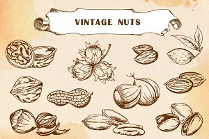 Set of hand drawn vintage nuts