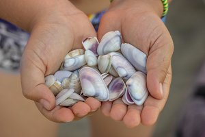 Sea shells in hand