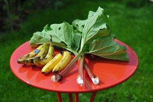 Rhubarb and Banana