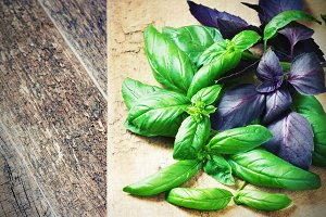 Bunch fresh basil on a wooden background. Aromatic spice.
