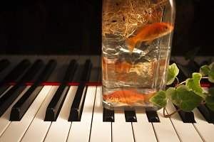 Goldfish on piano keyboard