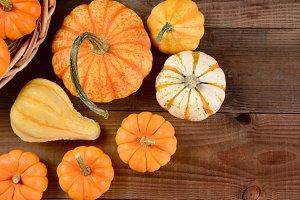 Fall Gourd Still Life