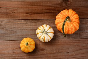 Decorative Pumpkins and Gourds