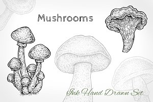 Mushrooms Set