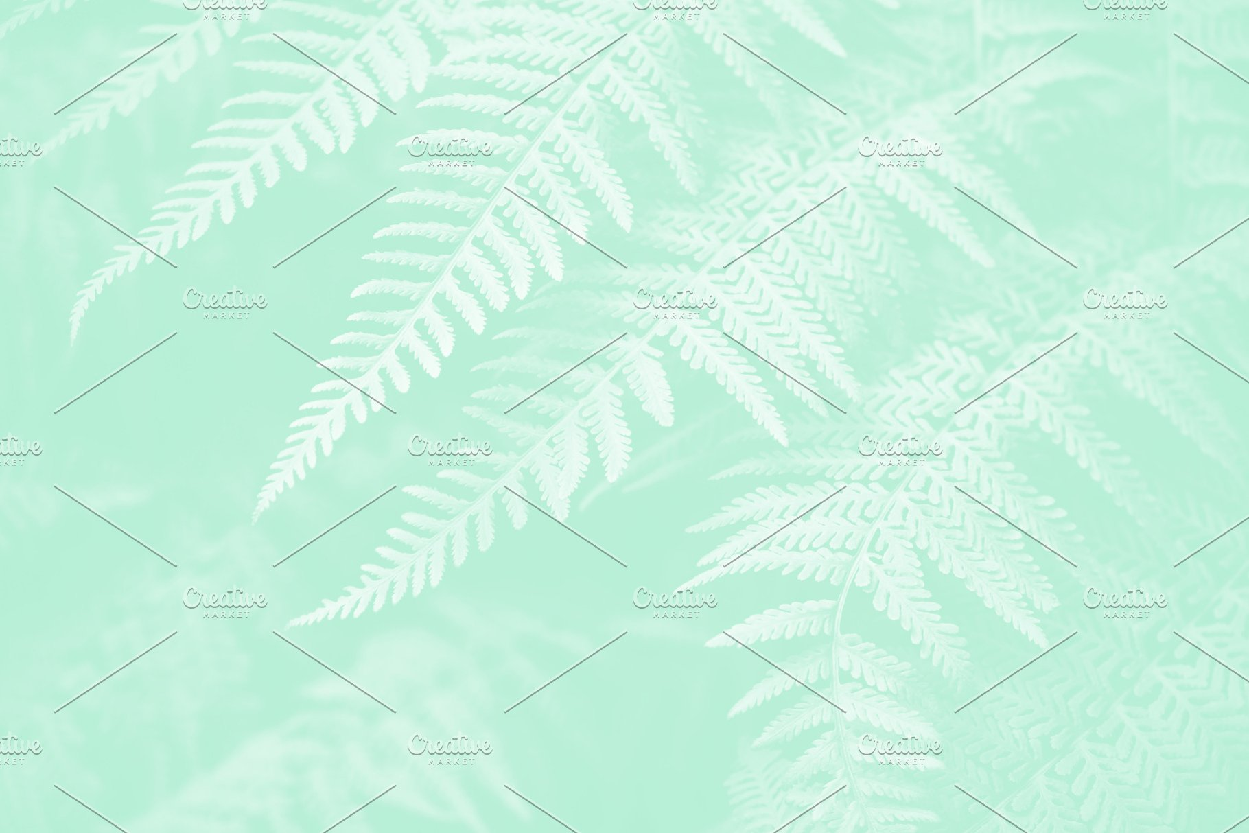 Lady Fern Neo Mint Color Background High Quality Nature Stock