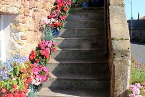 Stone stairs and flower pots