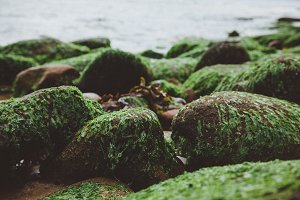 Shore Rocks with Seaweed