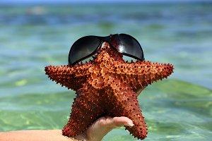 starfish in glasses in girl hand