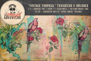 Vintage Tropical Transfers & Brushes