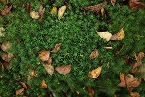 Incredible  moss