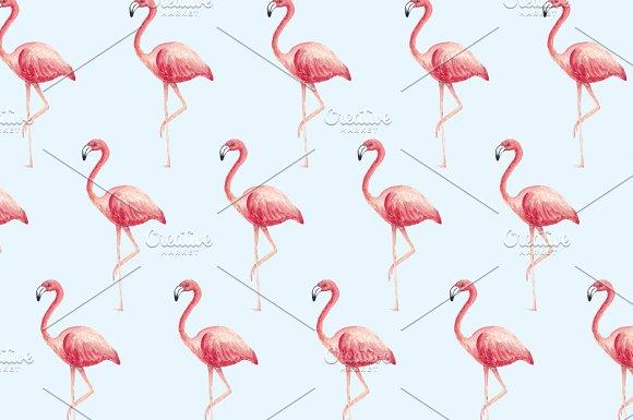 Flamingo Background Vector Illustrations Creative Market