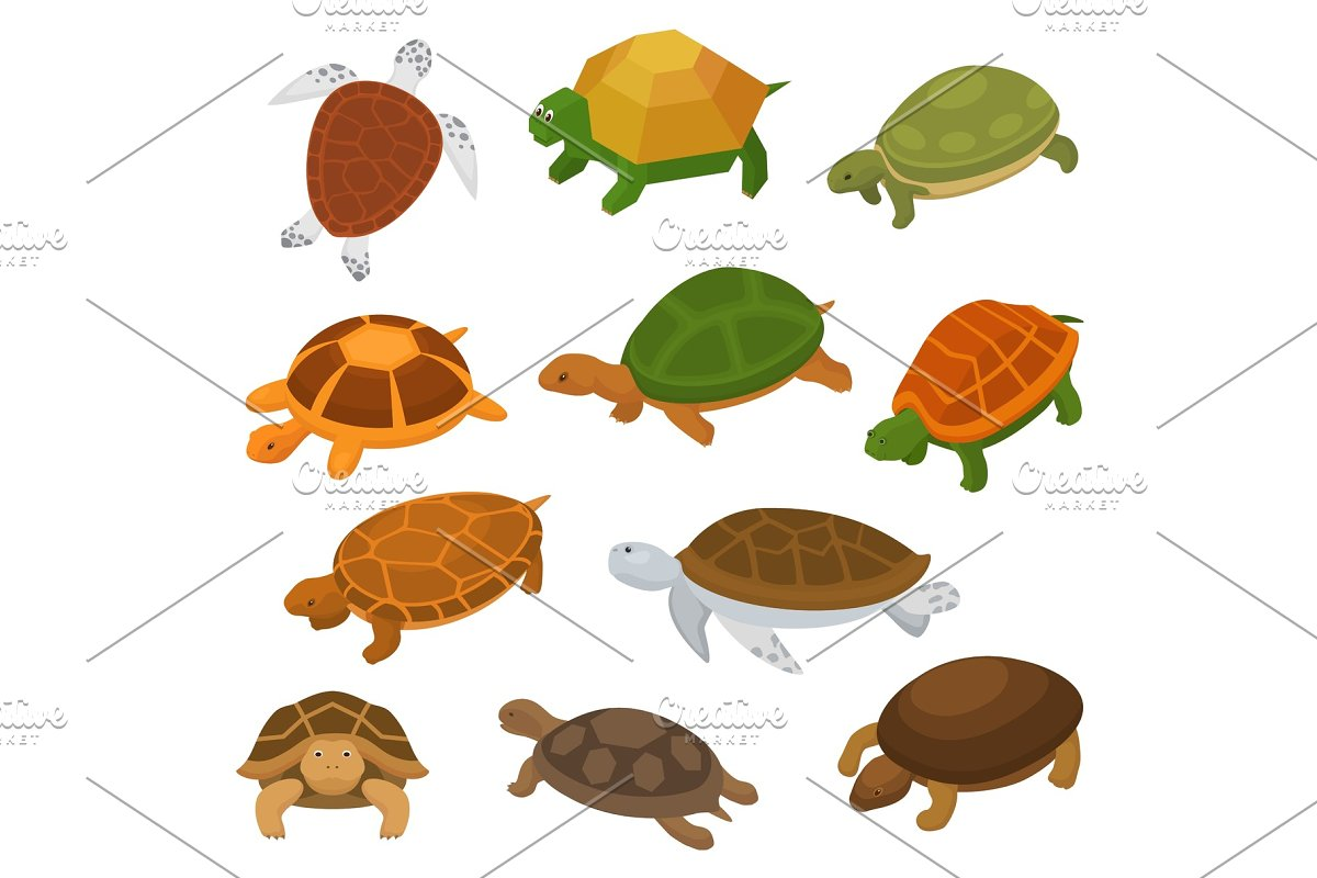 Turtle vector cartoon seaturtle