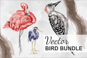 Vector Bird Collection