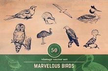 50 Vintage Bird Illustrations