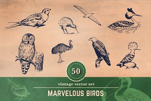 50 Vintage Bird Illustrations