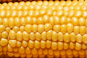 Ripe yellow corn