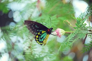 Butterfly - Stock Photography