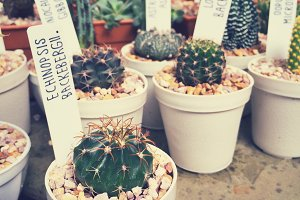 Hipster Style Cactus