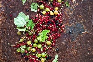 Redcurrant, blackcurrant & gooseberr
