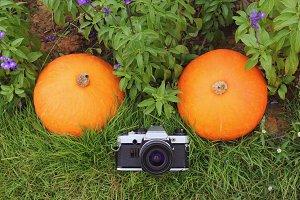 Film camera and pumpkins in garden