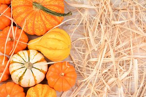 Ornamental Gourds WhiteTable Straw