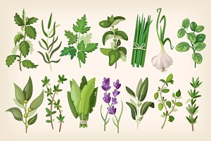 Common Vector Herbs