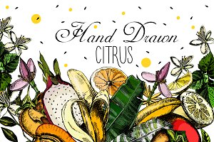 Hand drawing Citrus fruits