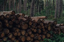 Pile of Logs in a Dark Forest