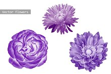 Purple Flowers: Aster, Rose, Dahlia.