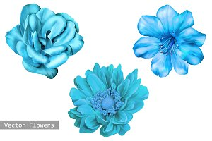 Blue Flowers: Camellia Rose, Dahlia
