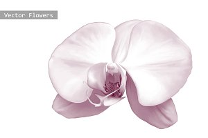 Orchid. Purple flower. Vector
