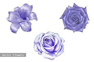 Purple Lily and Rose flowers. Vector