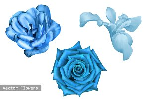 Blue Flowers: Iris, Camellia, Rose.
